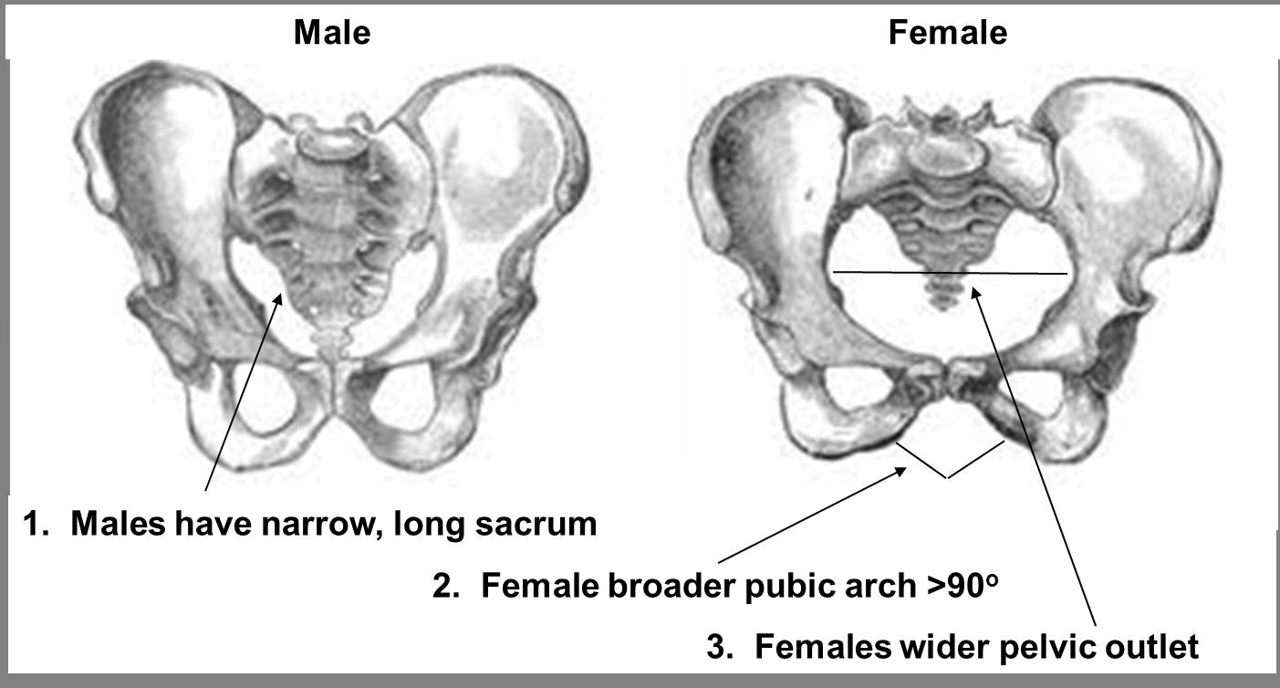 nh-chs-anatomy / Identifying Bone (8-9)